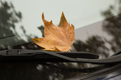 Dry leaf on a car window Stock Photos