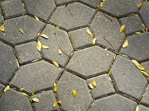Dry leaf and cement floor Stock Image