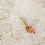 Dry leaf on the cement floor Stock Photo