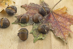 Dry leaf and chestnuts Royalty Free Stock Images
