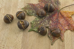 Dry leaf and chestnuts Royalty Free Stock Photo