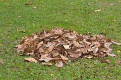 Dry leaf clean sweep, cleaning garden. Dry leaf clean sweep at grass field, cleaning garden Stock Photos