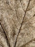 Dry leaf close up background Royalty Free Stock Image