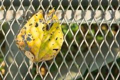 Dry Leaf. Close up dry a leaf on steel grate Stock Image