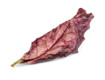 Dry leaf. Stock Image