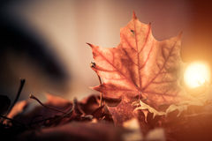 Dry leaf closup Royalty Free Stock Images