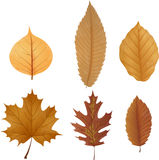 Dry leaf collection Royalty Free Stock Photo