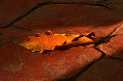 Dry leaf on concrete floor Stock Image
