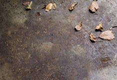 Dry leaf on concrete floor. Stock Photos