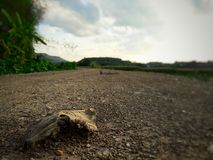 Dry leaf. Countryside in Thailand royalty free stock images