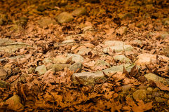 Dry Leaf Covered Path Stock Photography