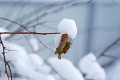 Dry leaf covered with snow Royalty Free Stock Images