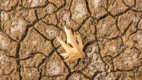 Dry Leaf on cracked ground Royalty Free Stock Photos