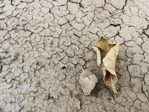 Dry leaf on the cracked soil. Caused by drought Stock Photo