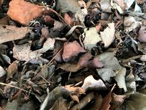 Dry leaf dead leaves plant ground royalty free stock photos