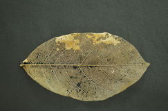 Dry leaf decompose structure on black fabric background Royalty Free Stock Photography