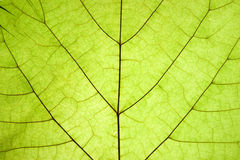 Dry leaf detail texture Royalty Free Stock Photos