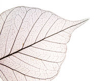 Free Dry Leaf Detail Texture Stock Photos - 19704073