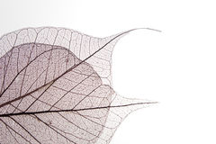 Dry leaf detail texture Royalty Free Stock Images