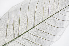 Free Dry Leaf Detail Texture Royalty Free Stock Photography - 32051727