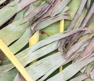 Dry leaf or dry banana leaf Royalty Free Stock Photos