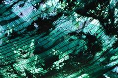 Dry leaf fall on shading net Stock Photos