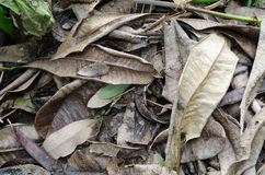 Dry leaf. Fallen leaves in the park Royalty Free Stock Photography