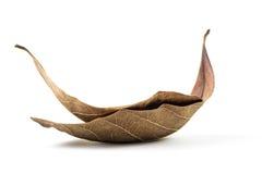 Dry leaf Royalty Free Stock Photos