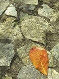 A dry leaf fallen over rocks wall stock photo