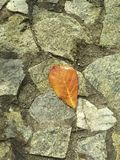 A dry leaf fallen on the rocks wall vector illustration