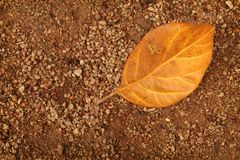 Dry leaf falling on the ground.  Royalty Free Stock Images