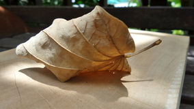 Dry leaf falling on wooden floor Stock Photography
