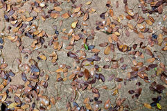 Dry leaf on floor. Dry leaf on walkway floor Royalty Free Stock Images