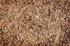 Dry leaf on floor background Stock Images