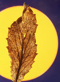 Dry leaf in front of sun Royalty Free Stock Photos