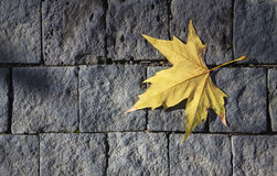 Dry leaf on gray brick wall Stock Images