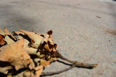 Dry leaf. On gray pavement Stock Photography