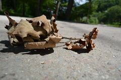 Dry leaf. On gray pavement Royalty Free Stock Photography