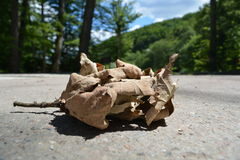 Dry leaf. On gray pavement Royalty Free Stock Images