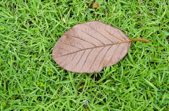 Dry leaf on green field Stock Image