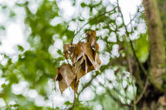 Dry leaf and green trees Stock Image
