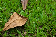 Dry leaf on the ground Stock Image