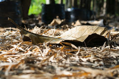 Dry leaf on the ground in autumn forest Stock Photos