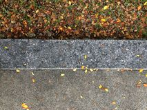 Dry leaf on the ground. Background and texture Stock Images