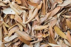 Dry leaf on ground. Dry leaf on ground close up Stock Images