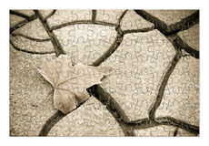 dry leaf on the ground - concept image in puzzle shape Stock Images