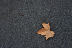 Dry leaf on the ground Royalty Free Stock Images
