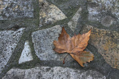 Dry leaf on the ground Stock Photo