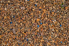 Dry leaf on ground with sloes bean Royalty Free Stock Photography