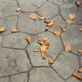 Dry leaf on ground Royalty Free Stock Photography